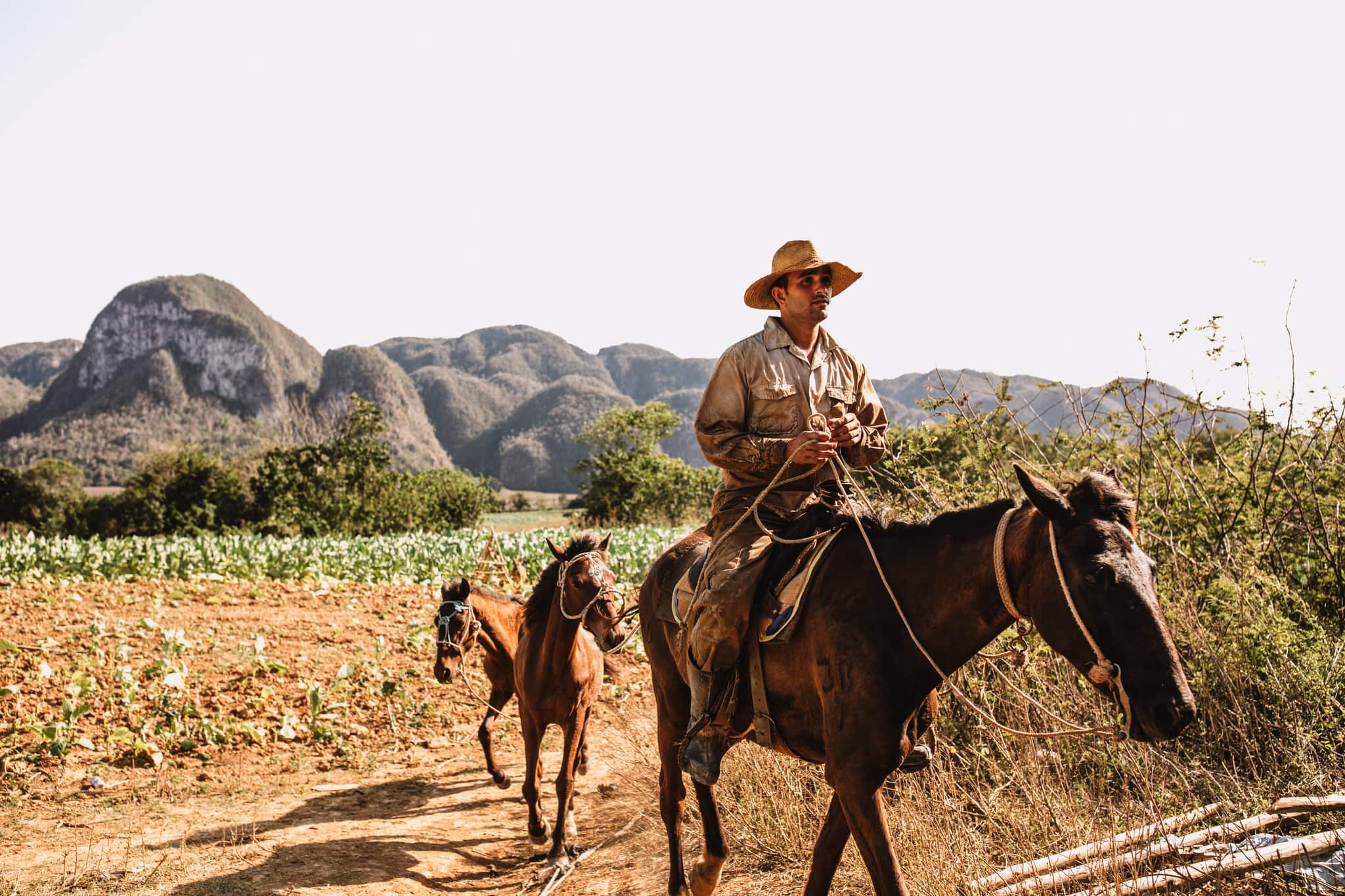 Tobacco farmer and horses on cigar farm in Vinales, Cuba. Wedding and travel photographer Brent Calis.